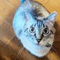 命のリレー。パパ猫からバトンを貰った「こしゃむ」