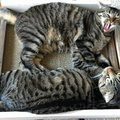 猫の爪とぎを防止する方法は?対策やおすすめ防止グッズを紹介