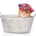 子猫のお風呂はいつから?入れる手順と注意点