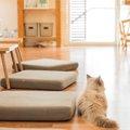 猫のいる部屋のおしゃれなレイアウトとおすすめインテリア