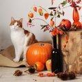 猫は柿を食べられる?与える時の注意点や安全な食べさせ方