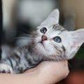 可愛い猫の名前をつけるための4つのポイント