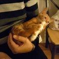 まだまだ甘えん坊な子猫ちゃん、しっぽはおしゃぶりに
