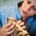 猫の顎にブツブツが!『猫ニキビ』の原因と3つの症状