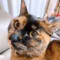 猫の『わかりにくい愛情表現』3選!こんな仕草をしていたら愛のサイン…