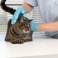 国内初「ヒアリ」被害!猫が刺された時の危険性は?最悪死亡する可能…