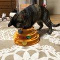 猫が「ひとり」で遊ぶのに最適!安全で楽しいおもちゃ3タイプ