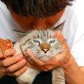 爪切りを前に猫ちゃんは…?