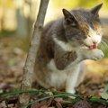 猫の黄疸は怖い病気の前触れ!原因を知って早期発見に繋げよう!
