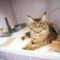 猫用ケージの選び方と快適な空間づくり
