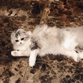こじはるの猫の名前は「けむしちゃん」、品種やエピソードについて