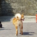 「ああ松島にゃ」猫の楽園『田代島』のパワースポットを愛犬・愛猫と…