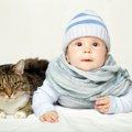 猫と赤ちゃんは一緒でも大丈夫?仲良しになって貰うために5つの方法