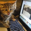 猫がお喋りしてる動画を子猫に見せたら…