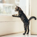 猫が外に出たがる時の対処法!しつけ方の2つのポイント