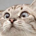 猫のひげ袋(ウィスカーパッド)の役割とその構造