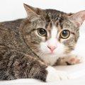 猫が『怯えているとき』に絶対しちゃダメな行為2つ!適切な対応方法と…