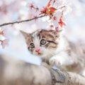 猫のサクラ見物~ネコの視力について~