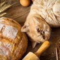 猫にパンを与えるのはOK?食べていいもの悪いもの