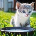 猫に豆乳を与えても大丈夫?与える時の注意点や効果