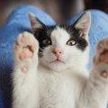 猫を飼う夢の意味とは 夢占いの診断結果