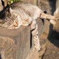 野良猫を飼うためには 飼い方と注意点