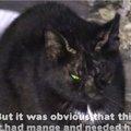 ひどい疥癬で目を開けるのもやっとだった野良猫。驚きの大変身で美猫…