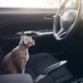 猫と長距離で移動する時の3つの方法!それぞれのメリット・デメリット