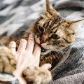 【50代女性が死亡】猫からも感染の恐れあり?!マダニ感染症(SFTS)…