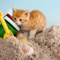 猫のトイレとして代用できるおすすめ商品3選!砂やスコップの代用品も…