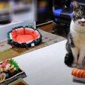 お寿司をジーッ。猫ちゃんの大好物、まぐろをGET?!