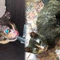 火災現場から子猫を救ったママ猫…火傷を乗り越え新たな未来へ!