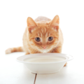 猫用ミルクの選び方や注意点について