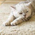 猫の甲状腺機能亢進(こうしん)症について。10歳以上の猫は特に注意!