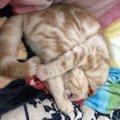 【かわいい】猫が「まぶしい寝」する理由5つ