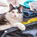旅行中は猫をどうする?留守番させるときの方法と一緒に行く場合の注…