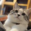 猫は狩人!ストレス発散に重要な本能をくすぐる遊び方5選