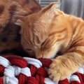 「くっちゃ~い!」あまりの刺激臭に驚きを隠せない猫さんが注目を集…