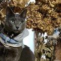 猫にぴったりの『名前』を付ける方法5つ!名付けで注意すべきポイント…