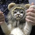 猫ちゃんからライオンさんに大変身♪