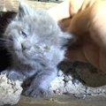 床下で産まれた子猫たちをレスキュー!目の感染症は回復するか?