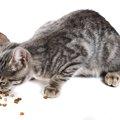 野良猫の餌やり時のマナーとは?
