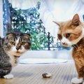 ひとり遊びを楽しむ猫さん!邪魔が入ったらどうなる?