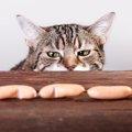 猫が食欲不振になる原因とその対処法