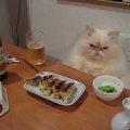 【1日お疲れ様でした♪】夕飯時のお父さんみたいなニャンコ!