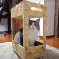 ぴったりサイズでキッチンワゴンが気に入った猫ちゃん♡
