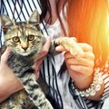 地震が起きたとき、愛猫をどう守ればいい?対策は?