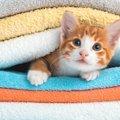 洗濯で猫の毛を取る3つの方法!おすすめ商品まで