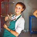 猫シェルター(保護施設)について  その活動と保護猫の譲渡