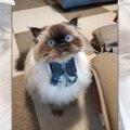 おやつおねだり作戦があざと可愛い♡おしゃれ猫さんが話題